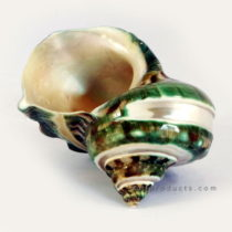 Pearlescent Green Shell