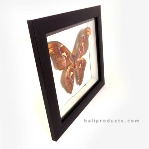 Wooden Butterfly Frame