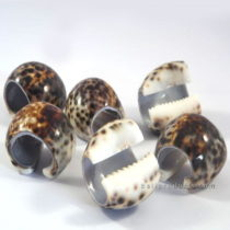 Set 6 Shell Napkin Rings