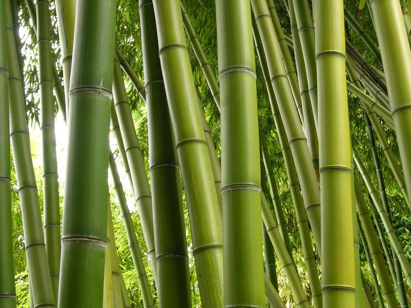 Bali Bamboo Products
