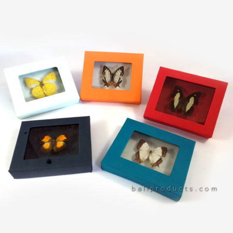 Colourful Butterfly Frame