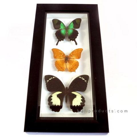 Frame 3 Butterflies